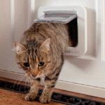 SureFlap cat entering home