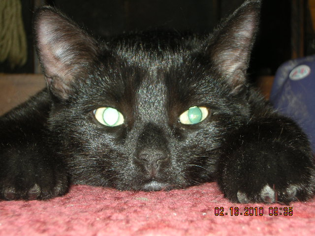 Black Fur Baby
