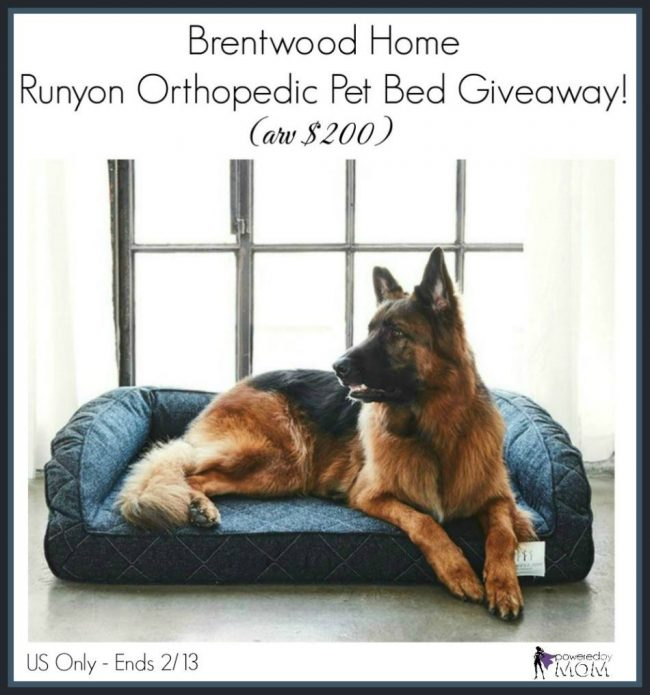 Brentwood Home Runyon Orthopedic Pet Bed
